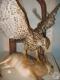 Фрагмент экспозиции зала природы